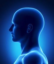 Left View Human Head