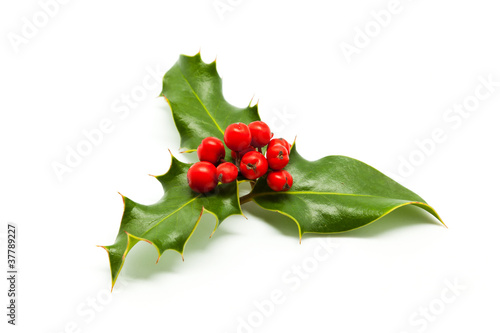 Fotografie, Obraz  Holly branch and red berries