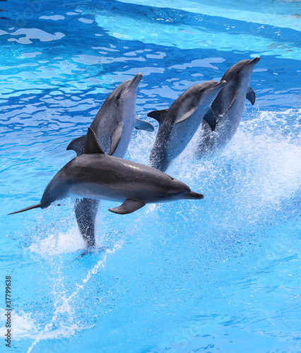 Poster Dolfijnen little dolphins jumping out of water