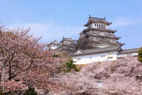 Foto op Plexiglas Japan Japanese castle and Beautiful pink cherry blossom shot in japan