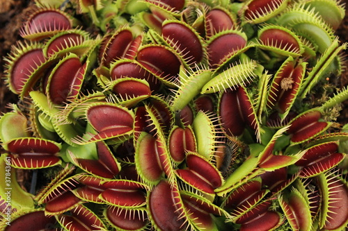 Fotografía  Carnivorous plant