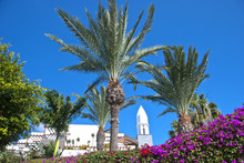 Canary Island Bell Tower And Palm Trees
