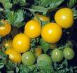 Tomaten_212351