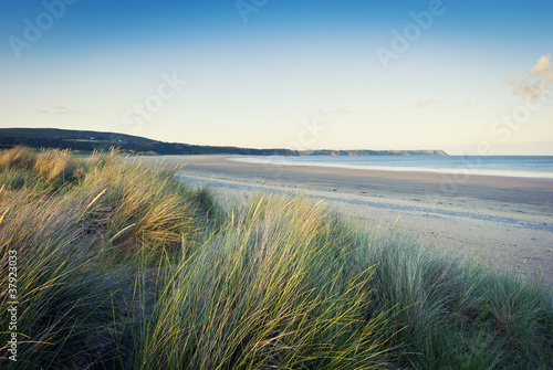 grass on sandy beach, pembrokeshire, wales Fototapeta