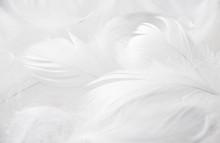 Weiße Federn