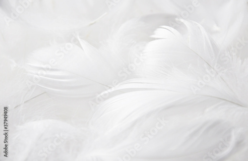 Weiße Federn Canvas Print
