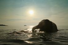 Bathing Elephants In The Sea