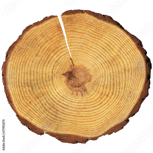 Fotografie, Obraz  wooden circle with a split cut of the log