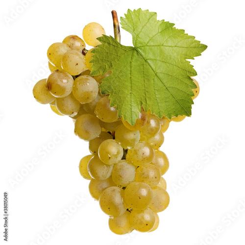 Fotografia, Obraz  Fresh bunch of white wine on a white background