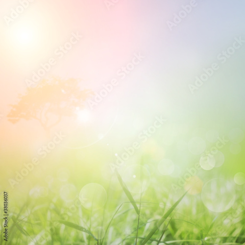 Spoed Foto op Canvas Lente Spring or summer nature sunset background
