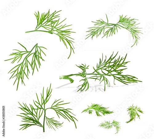 Stampa su Tela Dill isolated on white background