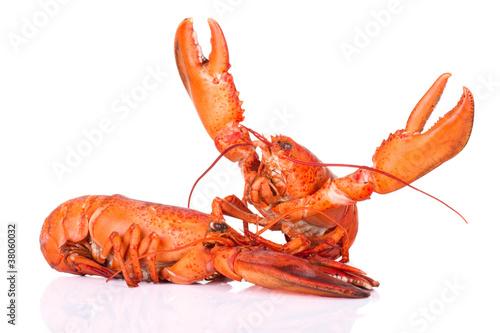Lobster fight won