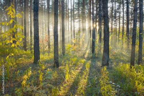Fototapeten Wald Sunset in the forest