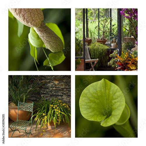serre, serres, véranda, jardin, planter, maison, plante ...
