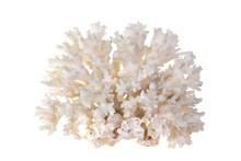 Sea Coral