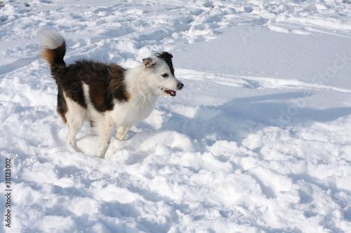 Foto  Hund im Schnee