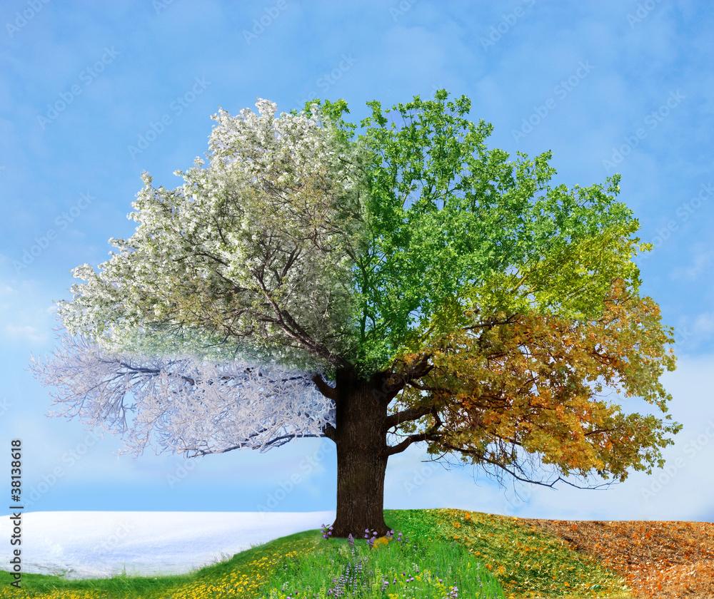 Fototapeta Four season tree