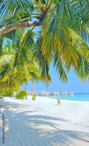 Photo maldive beach