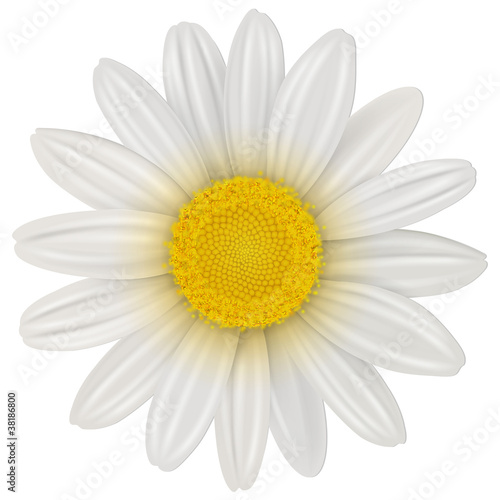 Canvas Print Daisy flower isolated