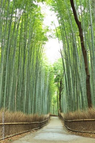 bambusowa-droga