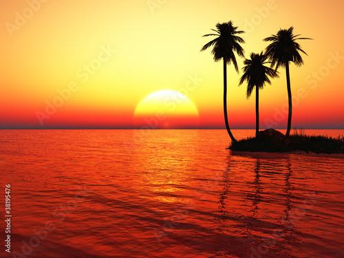 Fototapety, obrazy: Palms