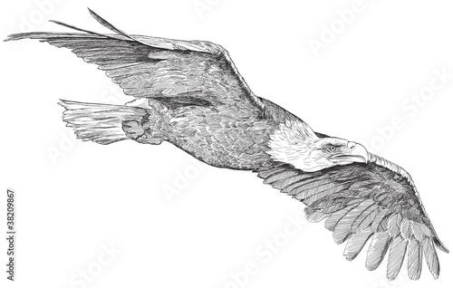 Photo  soaring eagle - vector sketch