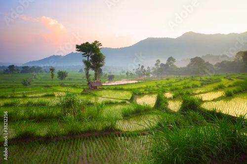 Garden Poster Rice fields Bali