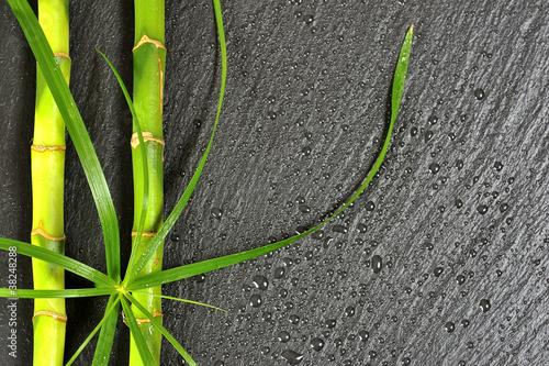 Fototapeta na wymiar Bambus Zitronengras