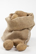 Raw potatoes in burlap bag isolated