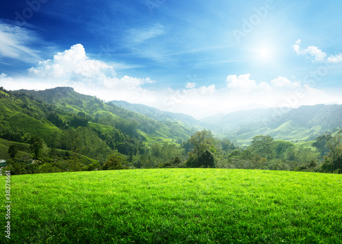 Poster Campagne field of spring grass and mountain