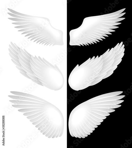 skrzydelka-ilustracji-wektorowych
