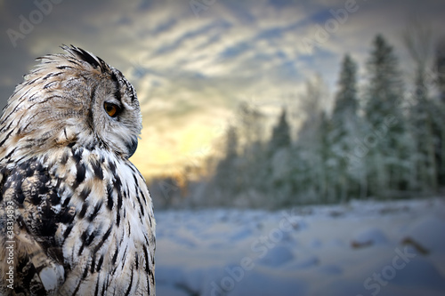 Staande foto Uil owl on winter forest background