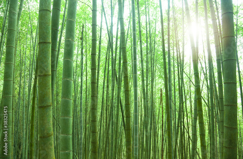 Papiers peints Bambou green bamboo forest with sunlight