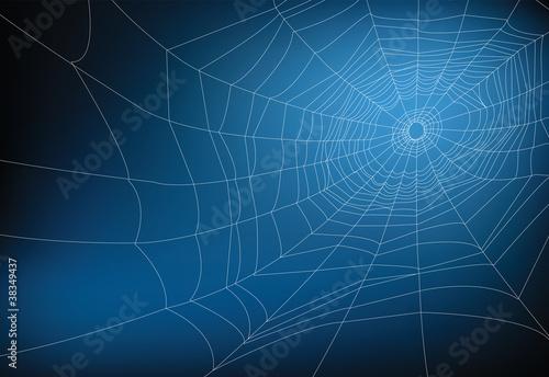 Fotografia spider web