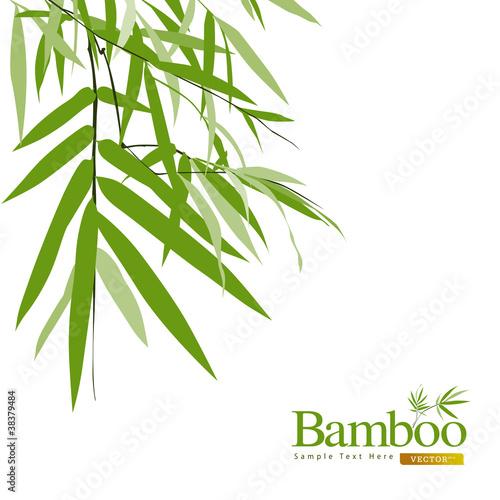 bambus-odizolowywajaca-kartka-z-pozdrowieniami-wektoru-ilustracja