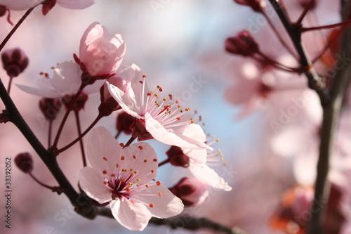 Naklejki kwiaty kwiat-jabloni