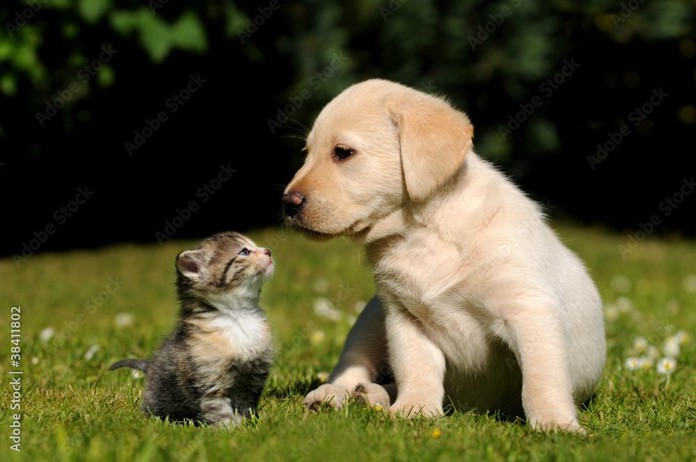 Fototapety, obrazy: Hund und Katze