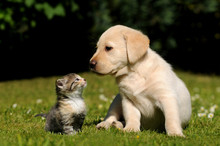 Animalfriends, Cute Dog And Cat On Meadow. Puppy Looking At Kitten.