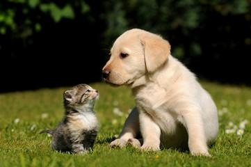 FototapetaHund und Katze