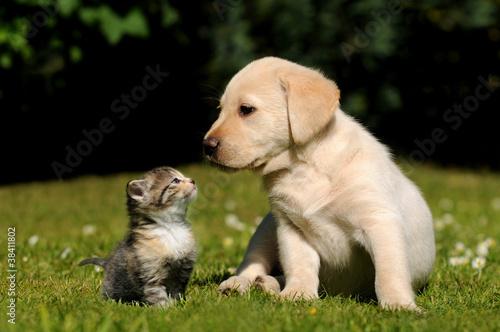 Staande foto Hond Hund und Katze