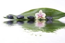 Foglia Verde Con Sassi E Orchidea Riflessi