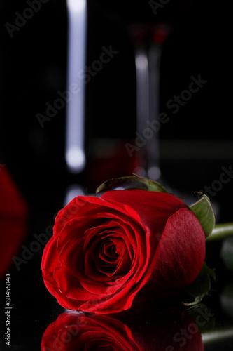 czerwona-roza-w-ciemnosci