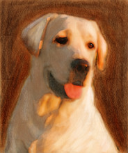 Oil Painting Portrait Of Young Yellow Labrador