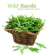 Wild Rucola
