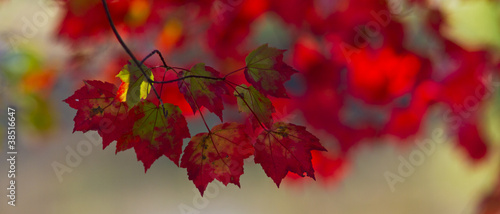 Tuinposter Bordeaux November foliage in the forest