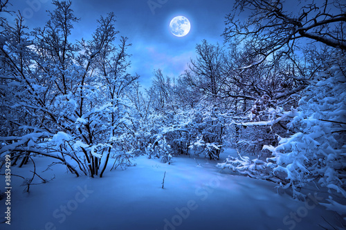 In de dag Volle maan Moonlight night in winter wood