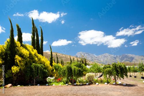 Poster Afrique du Sud landscape in Robertson, Western Cape, South Africa