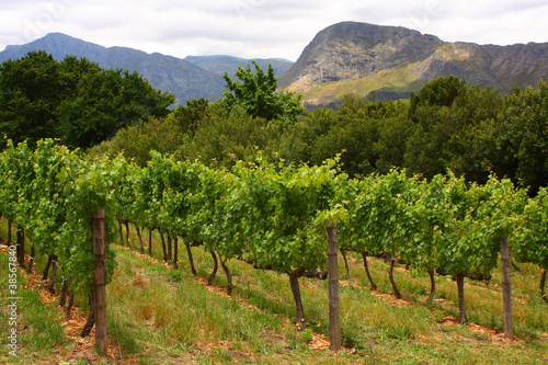 Foto op Plexiglas Zuid Afrika Vineyard, Montague, Route 62, South Africa,