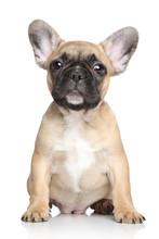French Bulldog Puppy On A White Background