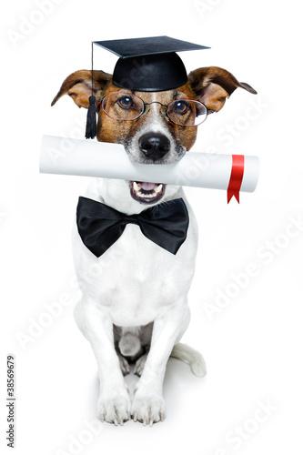 graduated dog with diploma Canvas Print